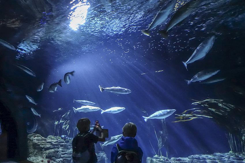 Ozeaneum Stralsund Zwei Jungs vor Aquarium mit Fischen